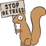 Squirrel_medium NO GE TREES