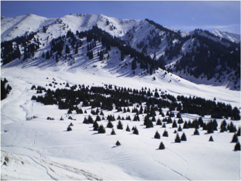 Almati-2