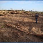 Deforestation-Paraguay