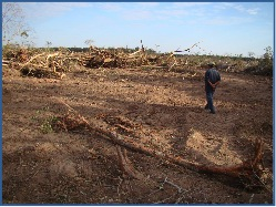 fao deforestation assessment is misplaced, GFC