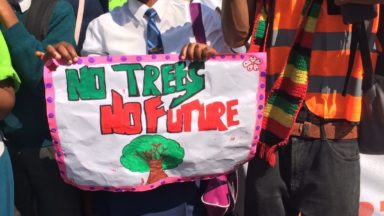 Journée internationale contre les plantations de monocultures d'arbres