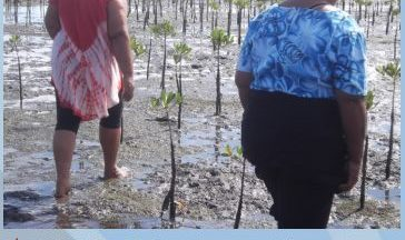 Community Conservation Resilience Initiative in Samoa