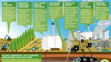 The Phantom of the COP21 Opera: bioenergy with carbon capture and storage