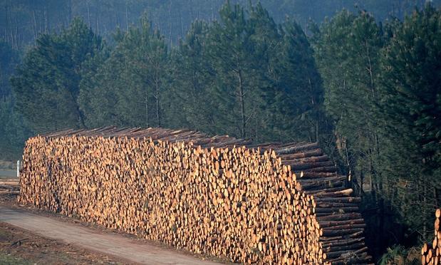 land carbon