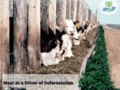 Forest Cover 49: Meat as Driver of Deforestation