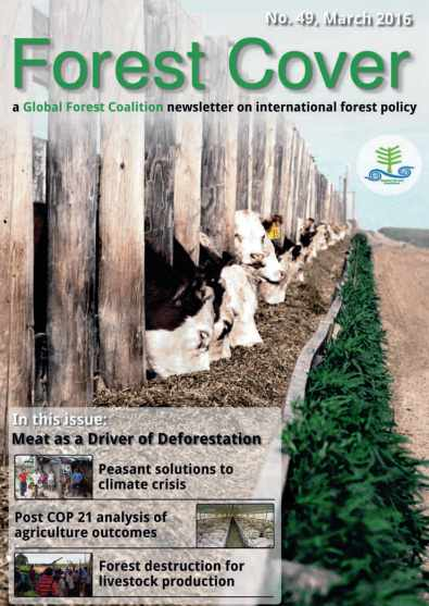 forest cover global forest coalition