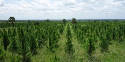 carbon credit Uganda Kachung