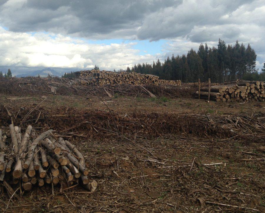 halt deforestation