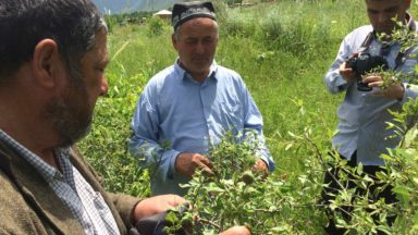 Tajikistan organized the first CCRI national workshop among GFC groups in 2016