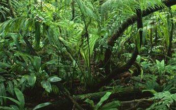 SDG Policy Brief: Biodiversity Conservation