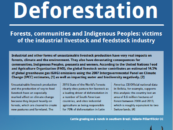 Meat as a Driver of Deforestation: Forests, communities and Indigenous Peoples: victims of the industrial livestock and feedstock industry