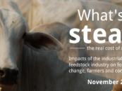 L'industrie de la viande et des produits laitiers détruit les forêts et la biodiversité
