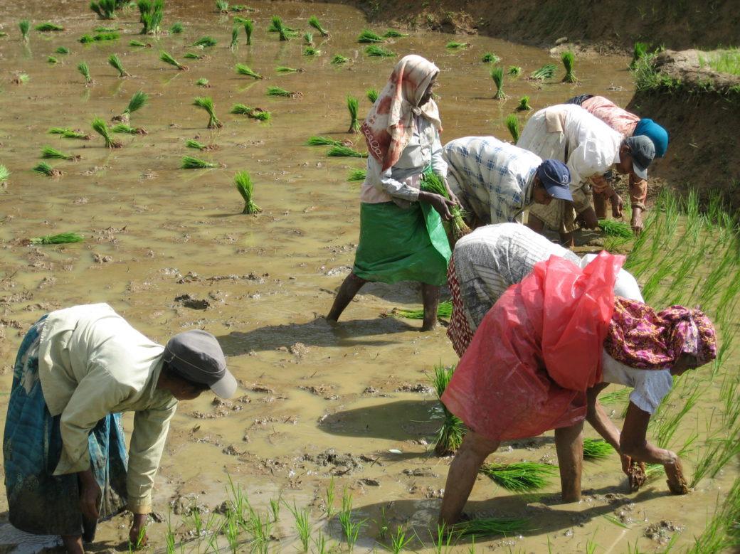 community conservation srilanka
