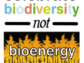 FAO's Bioenergy Themed International Day of Forests is a Threat to Mother Earth