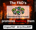 """""""Bioenergy Burns Forests""""—Environmentalists Denounce UN's Bioenergy Themed International Day of Forests"""