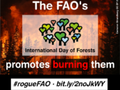 """Bioenergy Burns Forests""—Environmentalists Denounce UN's Bioenergy Themed International Day of Forests"