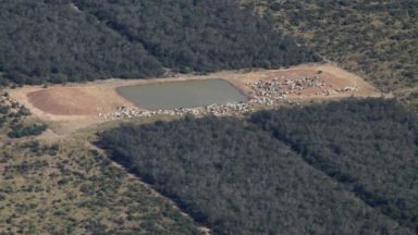 Palma y Ganado: los motores de deforestación que tienen en jaque los bosques