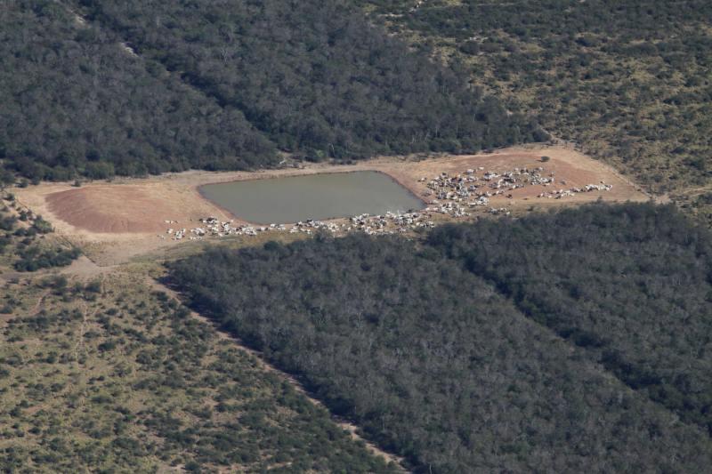 industrial livestock by miguel lovera