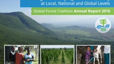 GFC Annual Report 2016