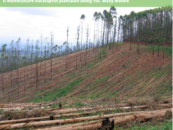 Letter of Concern from GFC and FOEI to Green Climate Fund on Monoculture Tree Plantations