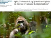 Q&A: Forests soak up greenhouse gases, so how do we ensure their protection?