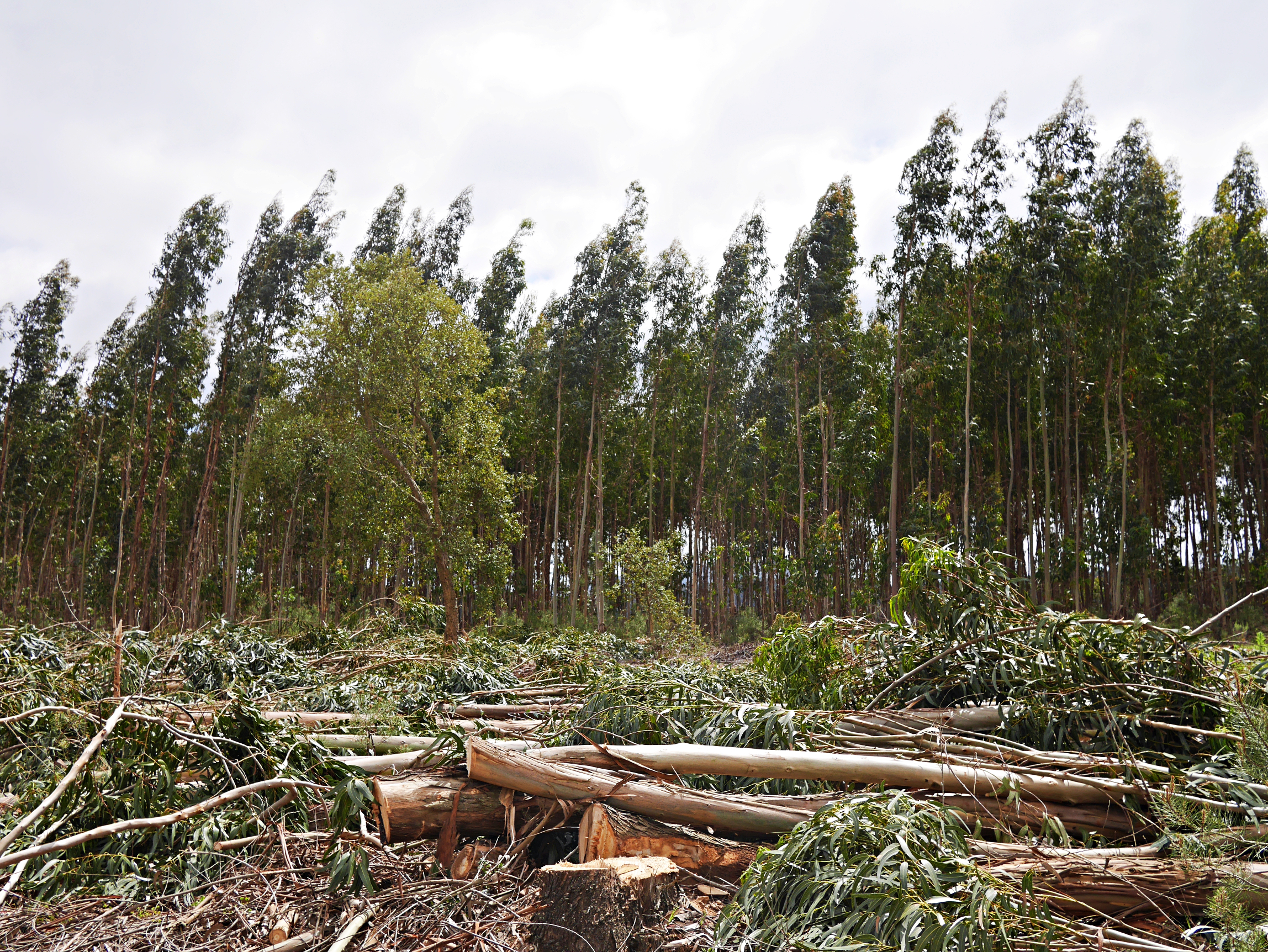 monoculture plantation essay 3 major agents of pollution: water, air and forests  forests with mixed vegetation as well as monoculture plantation independent surveys suggest that while the.