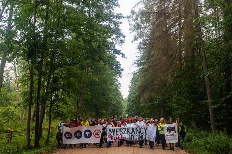 Bialowieza the last wild forest in Europe
