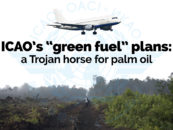 Almost 100 Organisations Worldwide Condemn UN Aviation Agency's Biofuel Plans