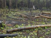 How Harvard's investments exacerbate global land and water conflicts