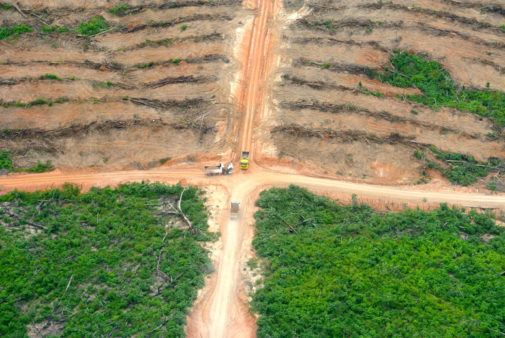 deforestation bioenergy