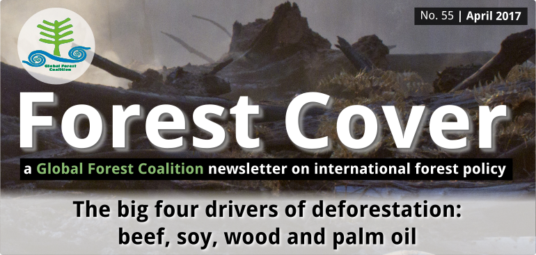 e9e3818d8fc Global Forest Coalition The Big Four Drivers of Deforestation  Beef ...