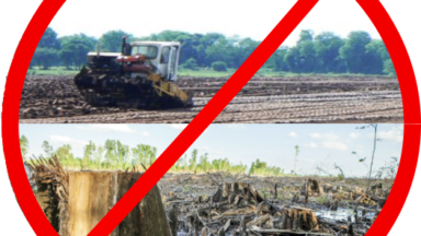 Open letter: Ireland's peat power stations must be shut down, not gradually converted to biomass