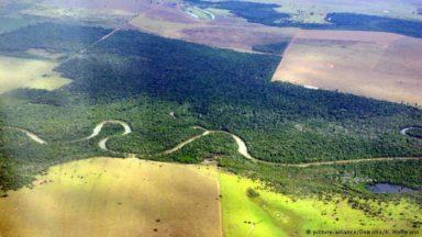 Carne de res: culpable de la deforestación en América Latina
