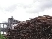 Over 120 groups from around the world declare large scale forest biomass energy a dangerous 'delusion'