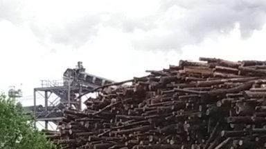 Más de 120 grupos alrededor del mundo declaran peligroso 'engaño' sobre producción energética a gran escala mediante el uso de biomasa forestal