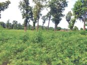 Rautahat and Bara reject Parsa park expansion