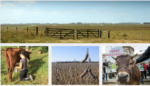 Incentivising deforestation for livestock products
