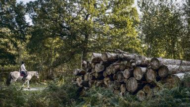 Tribune libre le sort de la biosphère. Manifeste de Tronçais pour la forêt française, notre bien commun