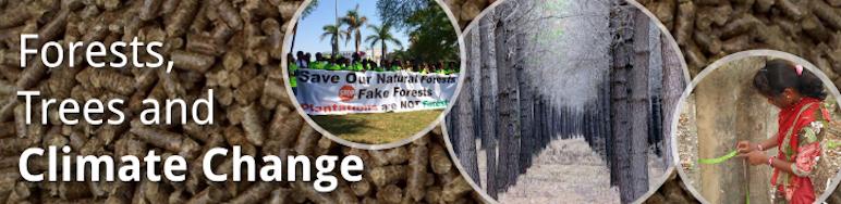 Forêts, arbres et changement climatique