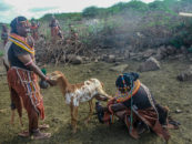 African Dialogue on Alternatives to Unsustainable Livestock Production