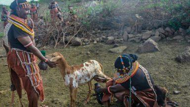 Dialogue africain sur les alternatives de l'élevage non durable