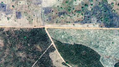 Greta Thunberg and the UN Climate Summit should reject monoculture tree plantations as a false solution