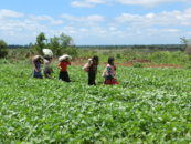 """They are only interested in soy"": how peasant and indigenous women in Paraguay are organising to survive the twin threats of industrial agriculture and climate change"