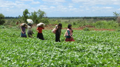 """""""They are only interested in soy"""": how peasant and indigenous women in Paraguay are organising to survive the twin threats of industrial agriculture and climate change"""