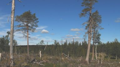70 organizations and 30 scientists call on politicians and authorities: Stop the logging of high conservation value forests in Sweden