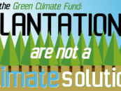 Why the Green Climate Fund must reject Arbaro's plantations