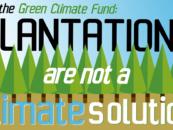 Por qué el Fondo Verde para el Clima debe rechazar las plantaciones de Arbaro