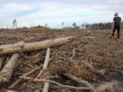 Nuevo informe: ¿Pueden las normas de sostenibilidad y gases de efecto invernadero proteger el clima, los bosques y las comunidades de los impactos de la bioenergía de la madera?