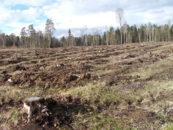 """Organizaciones ambientalistas condenan el rechazo de Estonia a la evaluación del impacto forestal """"centrada en el clima y la biodiversidad"""""""