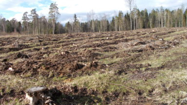 Environmental groups condemn Estonia's rejection of 'climate and biodiversity centered' forestry impact assessment